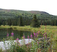 Beaver Dam by Jackie Muncy