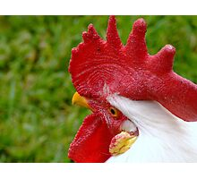 Rooster Red Comb Photographic Print
