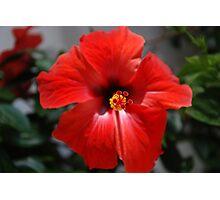 Scorching flower Photographic Print