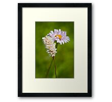 Bottle Brush and Mountain Daisy Framed Print