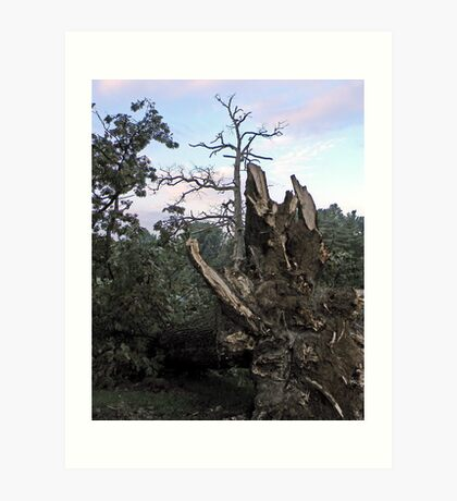 We All Need Roots Art Print