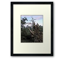 We All Need Roots Framed Print
