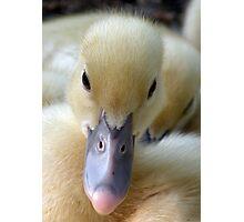 You Quack Me Up Photographic Print