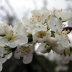 When Spring Is InThe Air! by Merice  Ewart-Marshall - LFA