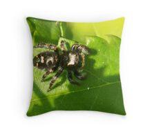 Jumper Spider Throw Pillow