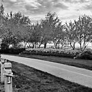 Centennial Drive at Dawn by Gracey
