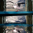 Red Billed Gull on the wharf by Ken Wright