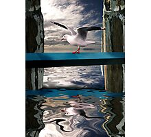 Red Billed Gull on the wharf Photographic Print
