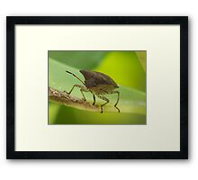 Here Looking AT You Framed Print