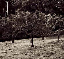 Pegan Hill by Christopher  Malatesta