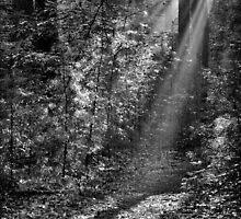Light My Way by Christopher  Malatesta