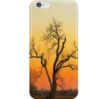Winter Season Sunset Tree iPhone Case/Skin