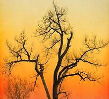 Winter Season Sunset Tree by Bo Insogna