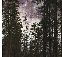Swiss Forest  by Marsstation