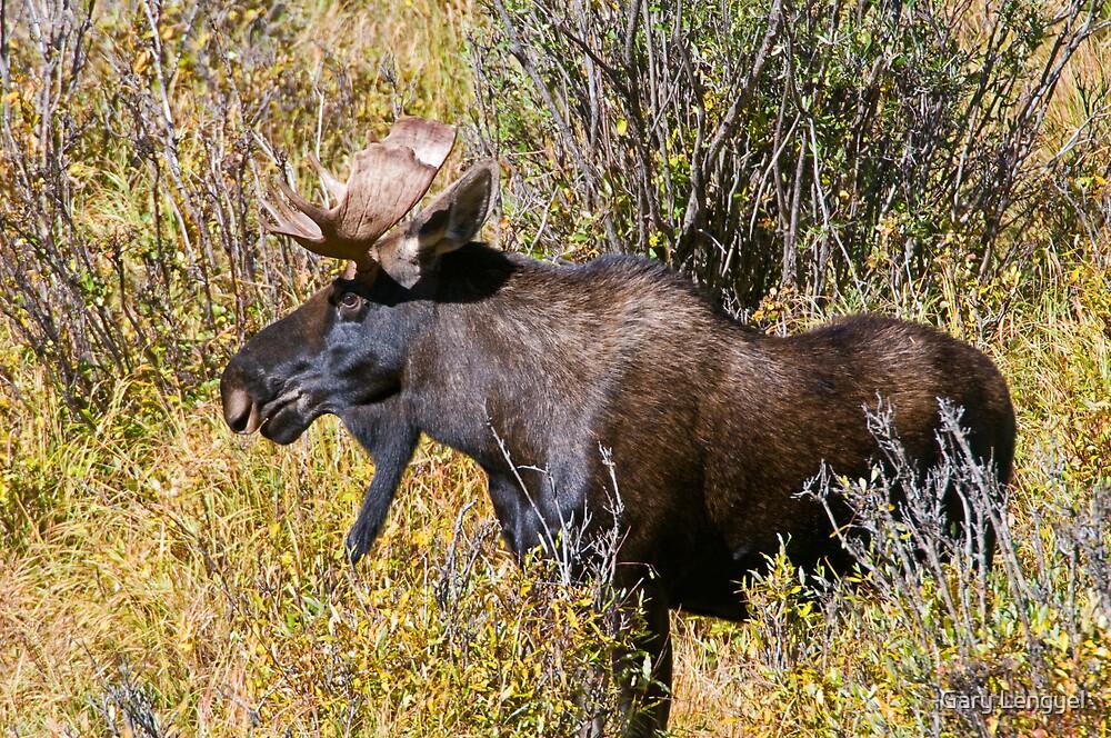 Like My Goatee? by Gary Lengyel