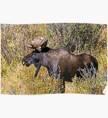 Like My Goatee? Poster