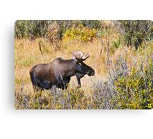 The Moose Is Loose Canvas Print