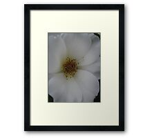 Ivory touch Framed Print