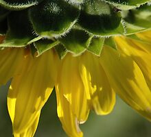 Slice of Sunshine by Danielle Girouard