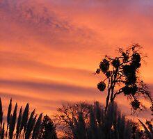 Sunrise surprise by goddessteri211
