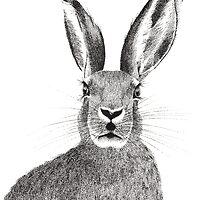 Hare pointillism illustration  by Kelsey Emblow