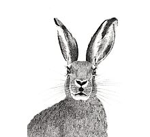 Hare pointillism illustration  Photographic Print