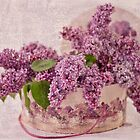 Lilacs In The Box by Sandra Foster