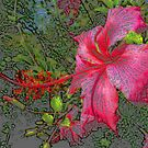 Hibiscus in Hot Pink by Rosalie Scanlon