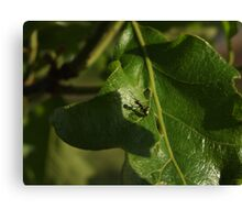 Ant and his shadow Canvas Print