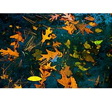 Leaves on a Lake Photographic Print
