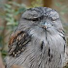 Tawny frogmouth by David  Hall