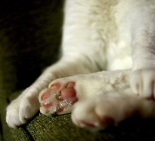 Paws by Tamara  Kenneally