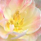 Blushing Bloom by Natalie Cooper