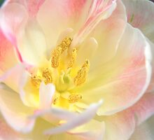 Blushing Bloom by Natalie Cooper