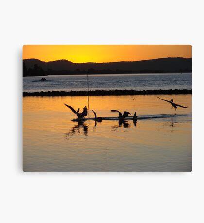 Orange Pelicans Feeding on River Mullet Canvas Print