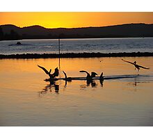 Orange Pelicans Feeding on River Mullet Photographic Print