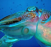 Cuttlefish Close by Christopher Hamilton Lansell