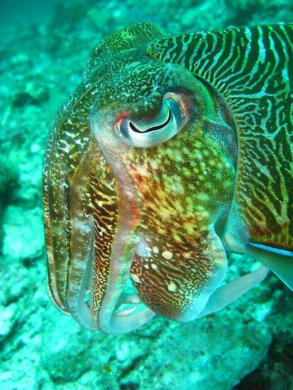 Neon Cuttlefish by Christopher Hamilton Lansell