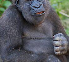 Primates by Steve Bullock