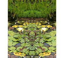 Northcote Community Gardens  Fantasy 10 Photographic Print