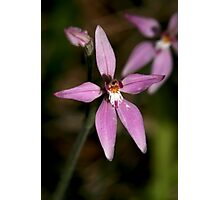 Pink Fairies Orchid - Mt Barker Summit Photographic Print