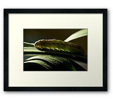 Little Green Caterpillar Framed Print