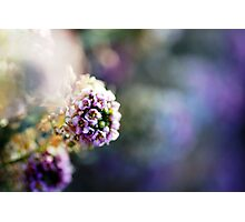 a Monet moment Photographic Print