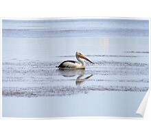 Pelican on Narrabeen Lakes, Northern Beaches Poster