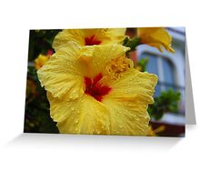 Hibisk in rain Greeting Card