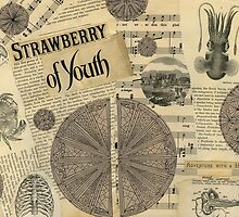 Strawberry of Youth by Casi Cline