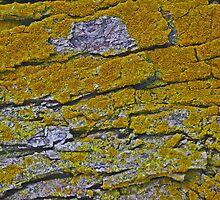 Nature's Blanket by © Jolie  Buchanan