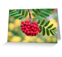 Mountain Ash Berries Greeting Card