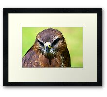 Fractual Falcon Framed Print