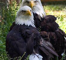 Two Eagles by FireDzine